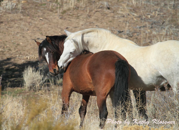 Pictures Of Wild Mustang Horses Wild Mustang Pics