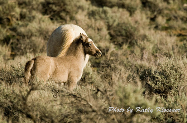 Gold mine horse study